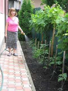 Genovieva watering her vines and tomato plants in the garden in Romania